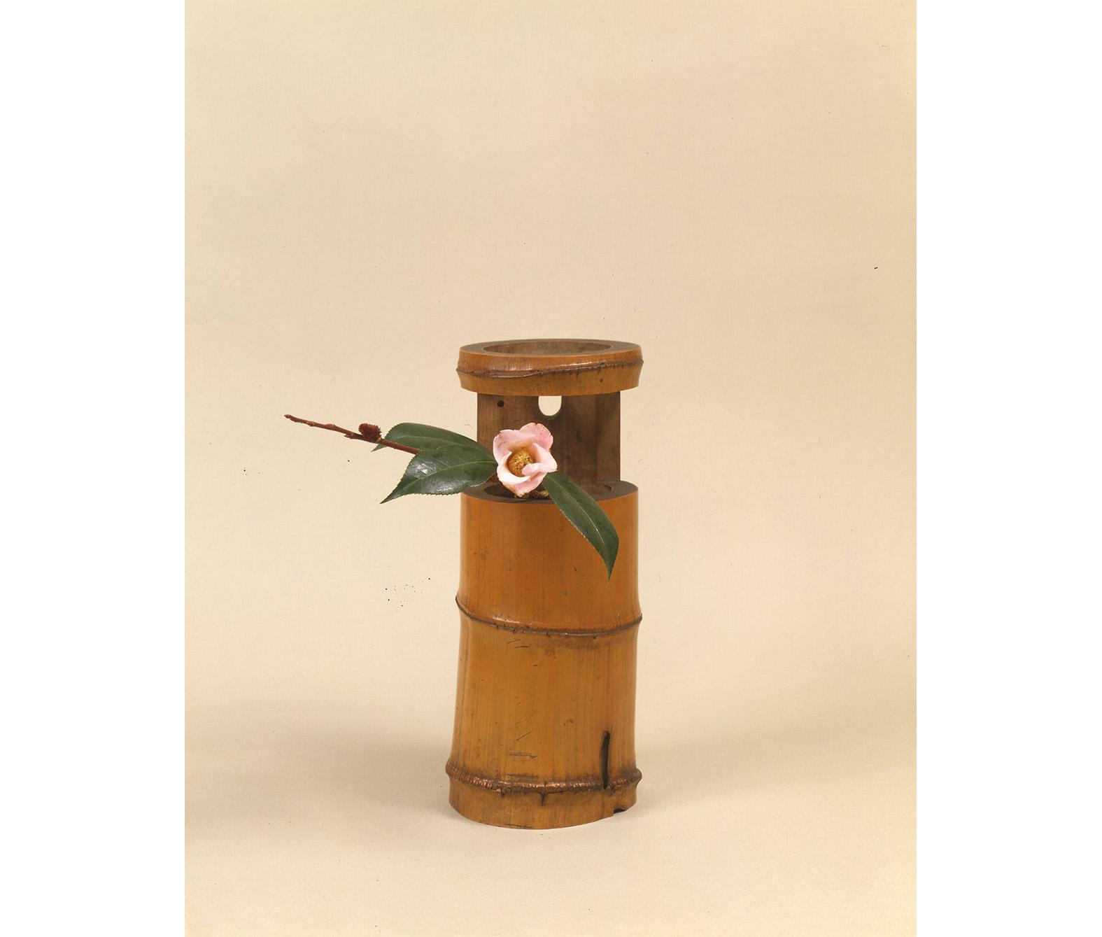 【今月の茶花】平成31年02月の茶花
