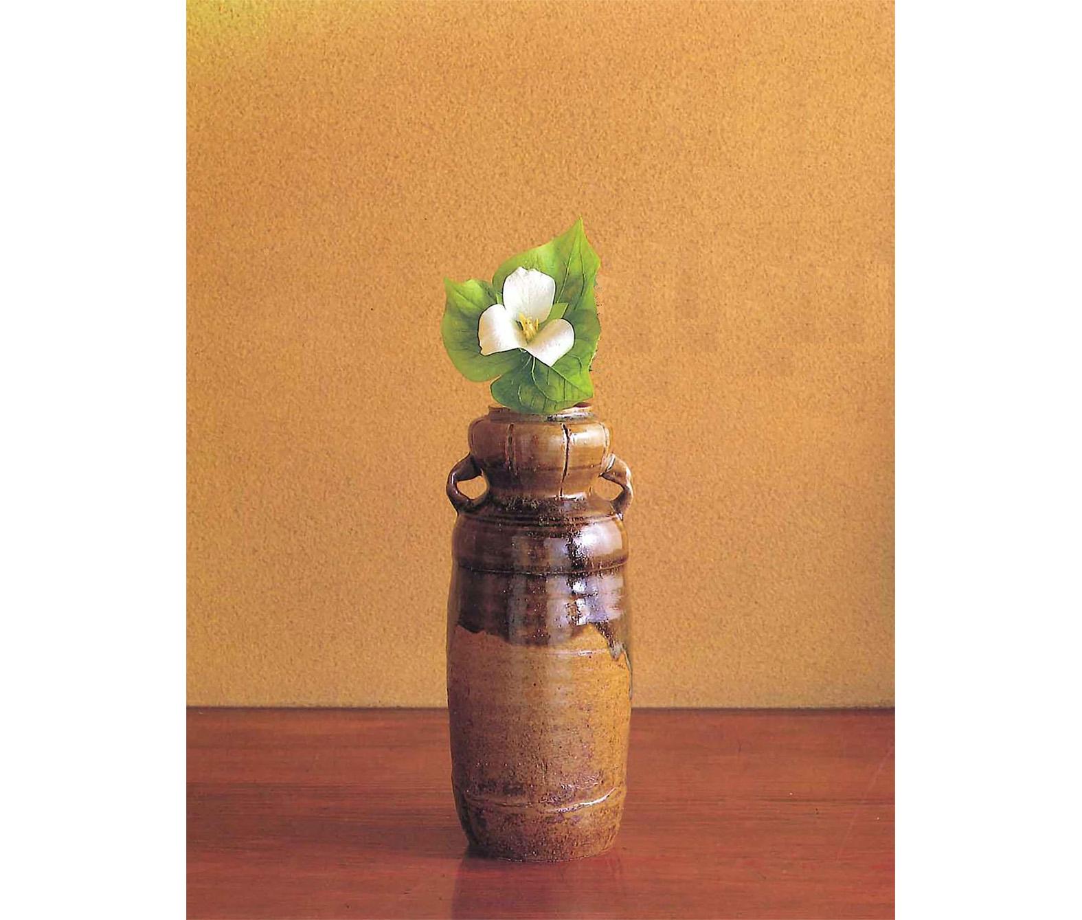 【今月の茶花】平成31年04月の茶花