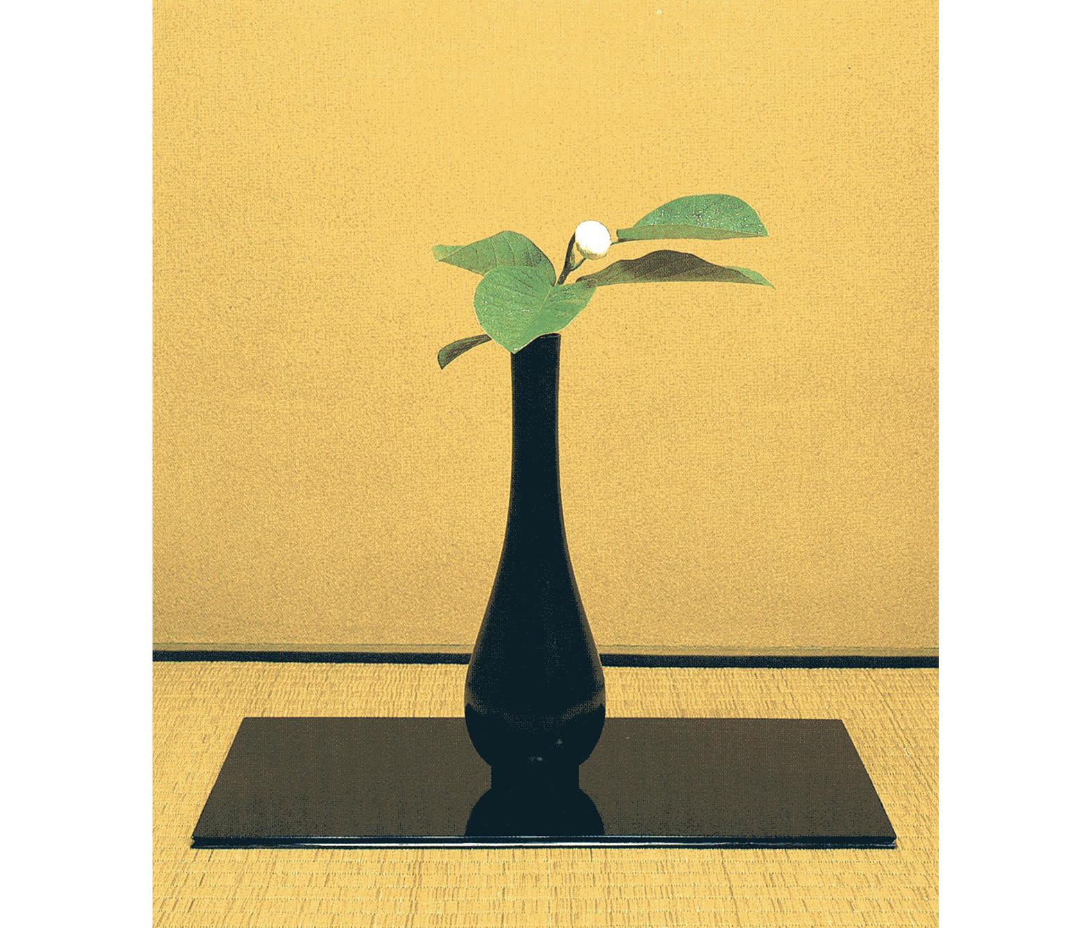 【今月の茶花】令和元年05月の茶花