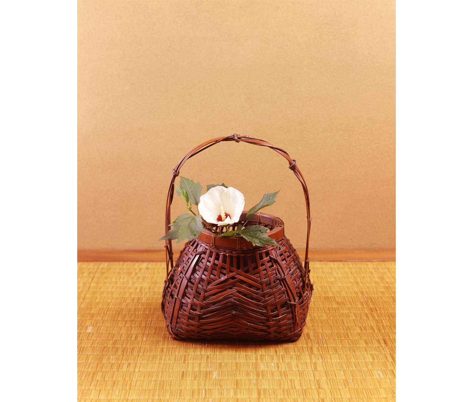 【今月の茶花】令和元年07月の茶花
