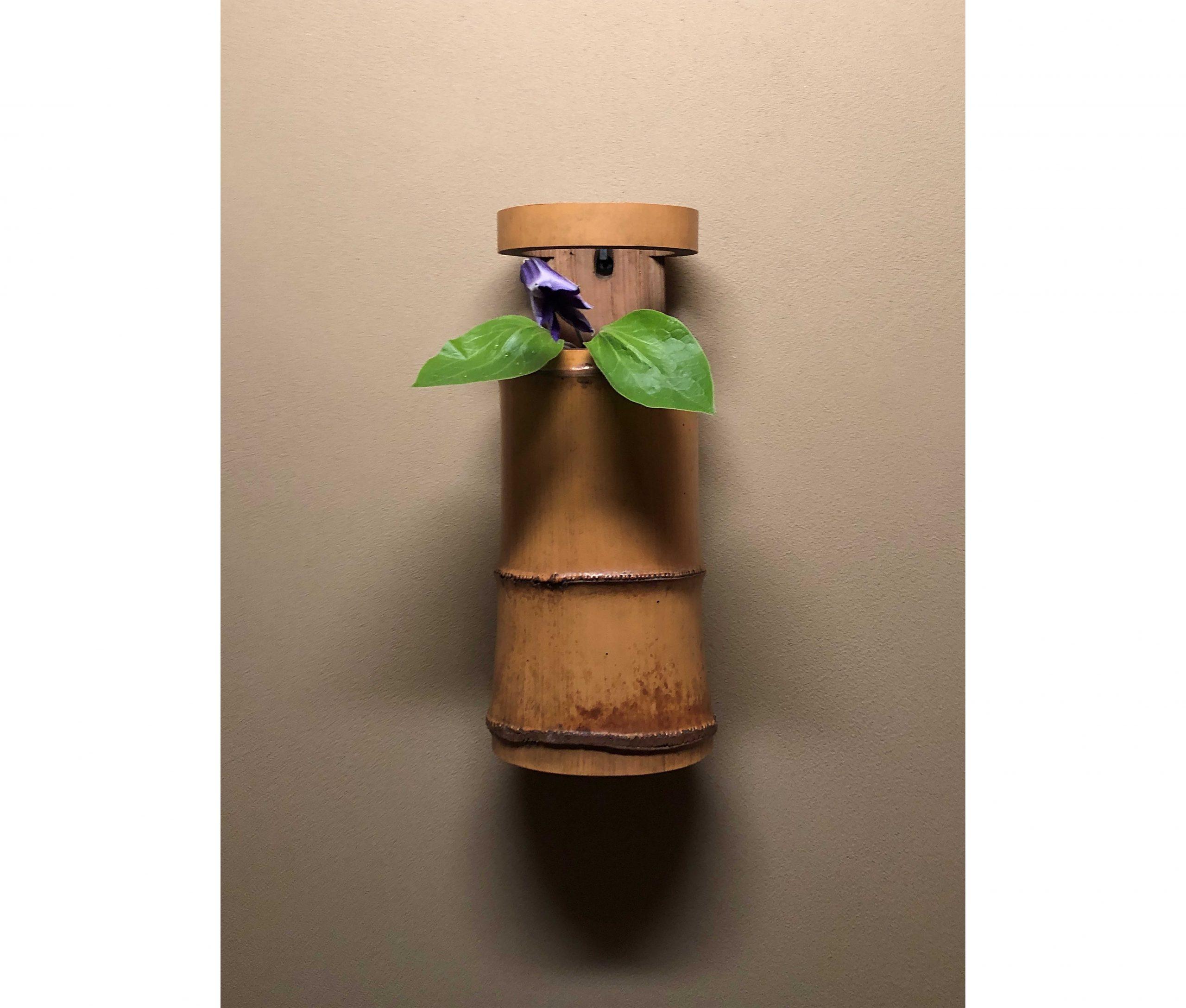 【今月の茶花】令和2年06月の茶花